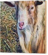 Billy Goat Closeup Wood Print