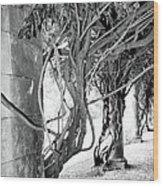 Biltmore Arbor Asheville Nc Wood Print