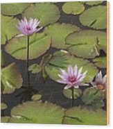 Biltmore Water Lillies Wood Print