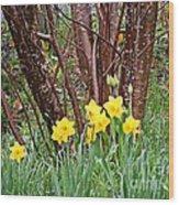 Birch And Daffiodils Wood Print