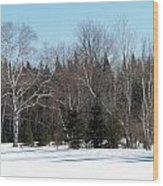 Birch And Evergreen Wood Print