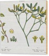Birch And Mistletoe Wood Print