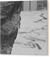 Birch Bark And Snow In Black And White Wood Print