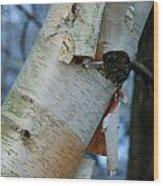Birch Bark Study No.1 Wood Print