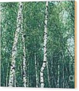 Birch Forest - Green Wood Print