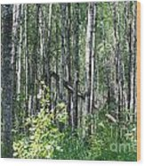 Birch Forest Wood Print