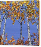 Birch Grove Wood Print by Cynthia Decker