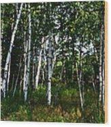 Birch Grove In The Sunlight Wood Print