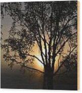 Birch In Silhouette Wood Print