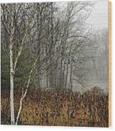 Birch In Winter Wood Print