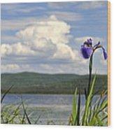 Birch Lake Iris Wood Print
