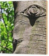 Birch Man Wood Print