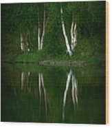 Birch Reflection Wood Print