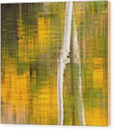Birch Reflections Wood Print