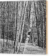 Birch Sentinels Wood Print