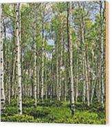 Birch Tree Grove In Summer Wood Print