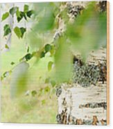 Birch Tree. The Soul Of Russian Nature Wood Print