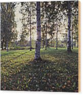 Birch Trees, Imatra, Finland Wood Print
