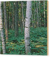 Birch Trees In A Forest Wood Print