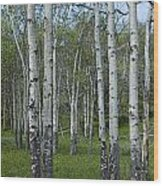 Birch Trees In A Grove No. 0148 Wood Print
