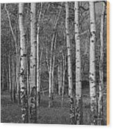 Birch Trees No.0148 Wood Print