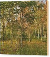 Birch Trees2 Wood Print