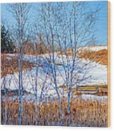 Birches And Cattails Wood Print