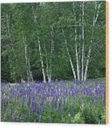 Birches In The Blue Lupine Wood Print