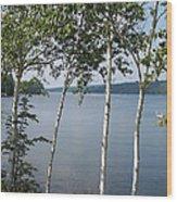Birches On Sunapee Wood Print