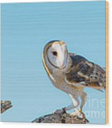 Bird 11 Wood Print