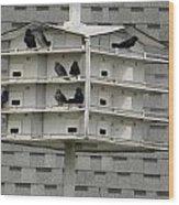 Bird Apartment House Wood Print