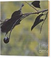 Bird Bait Wood Print