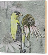 Bird Eating Seeds For One Digital Art Wood Print