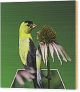 Bird Eating Seeds Wood Print