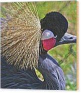 Bird Exotica  Wood Print