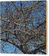 Bird Feed Wood Print