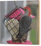 Bird Feeder Wp 06 Wood Print