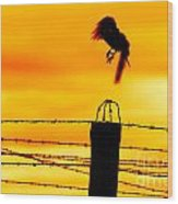 Bird Flying Off From Prison Fence Wood Print