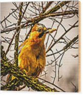 Bird Holding Food In Mouth Wood Print