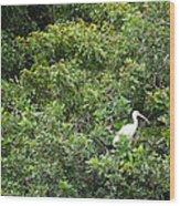 Bird In Bush Wood Print