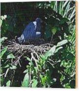 Bird In Nest Wood Print