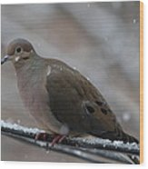 Bird In Snow - Animal - 011310 Wood Print