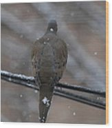 Bird In Snow - Animal - 01135 Wood Print by DC Photographer