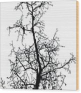 Bird In The Branches Wood Print