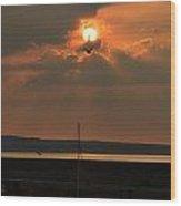 Bird In The Sun Wood Print