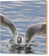Bird Landing Wood Print