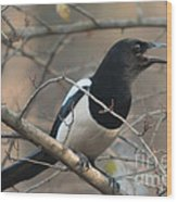 Bird Magpie Wood Print