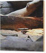 Bird - National Aquarium In Baltimore Md - 121216 Wood Print
