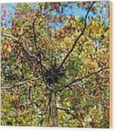 Bird Nest In A Tree Wood Print