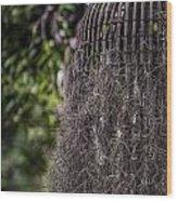 Bird Nest Tree Wood Print